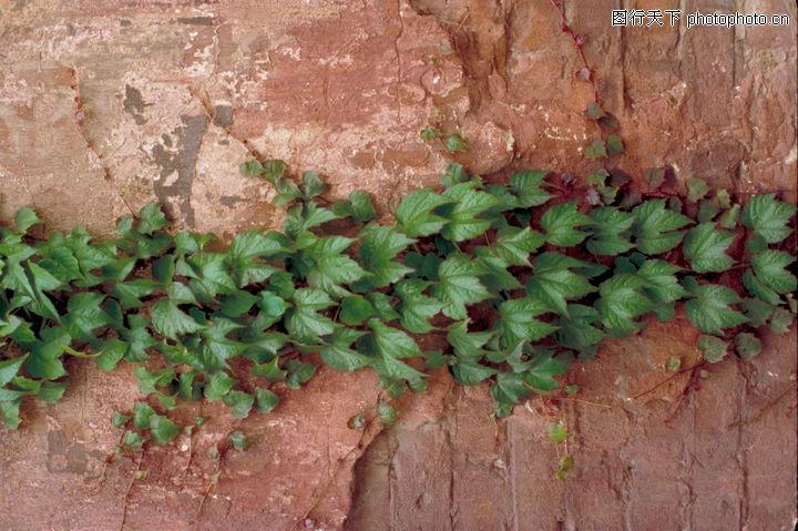 自然底纹,底纹,撞墙 红色 绿叶,自然底纹0099