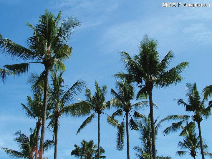 夏日风光,风景系列,椰林 高耸 迎风,夏日风光0020高清图片