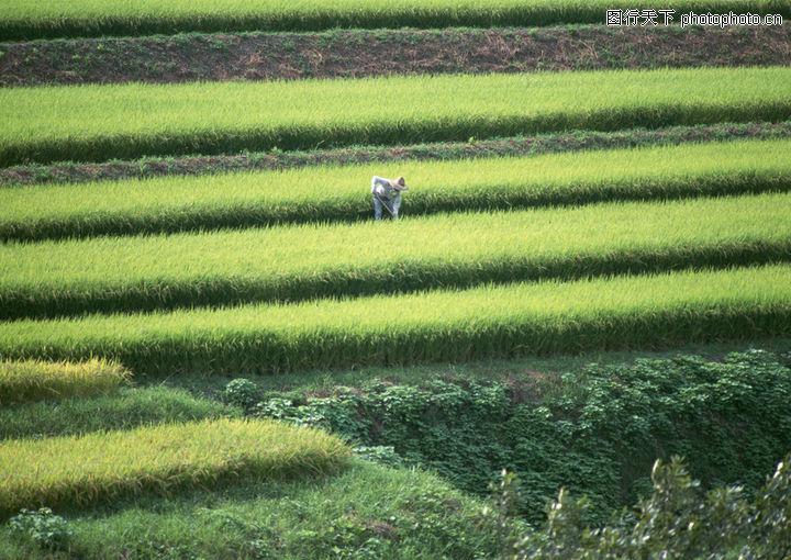 田野,风景系列,农间 劳作