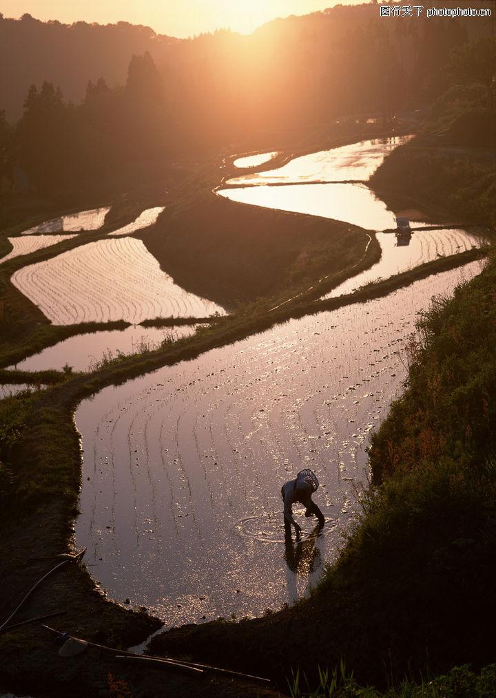 田野,风景系列,晨光 梯田