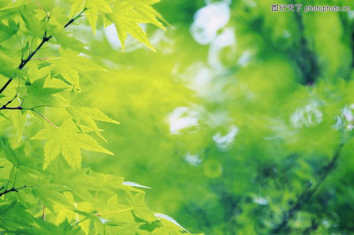 绿叶 风景系列 树叶 生长 茂盛