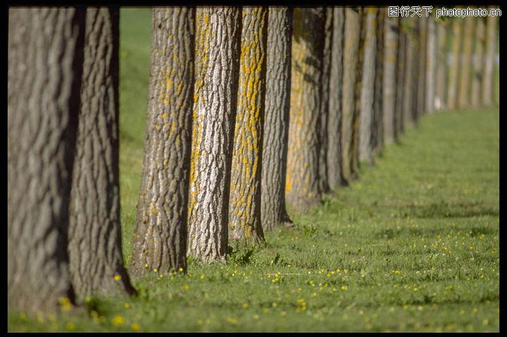自然元素,风景系列,挺拔树干,自然元素0042