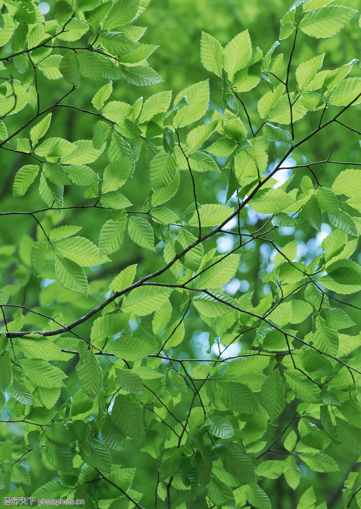 苍天大树,绿色风景,风景全集