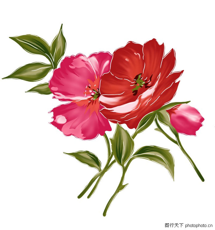 花纹边框 分层花纹 深红色 玫瑰花苞 花蕊