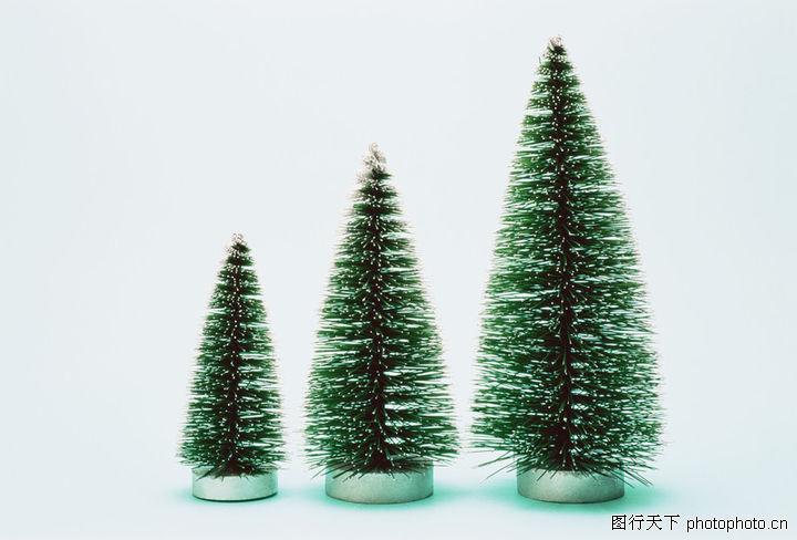 圣诞节庆新主题,生活,高矮 植物 松树,圣诞节庆新主题0059