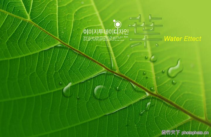 海报 东方设计元素 树叶 水滴 叶脉