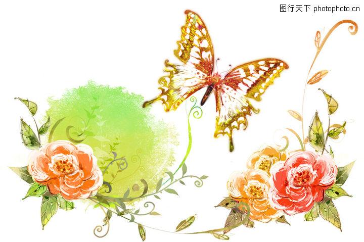 韩国花纹Ⅲ,彩蝶标本 牡丹花