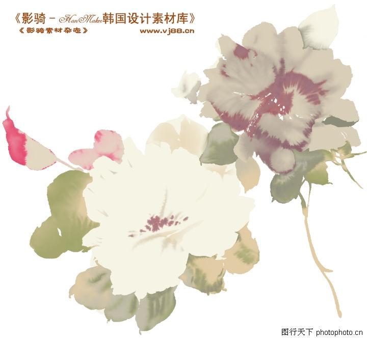 单朵艳丽配色花纹,人物,牡丹花 白花瓣,单朵艳丽配色花纹0015