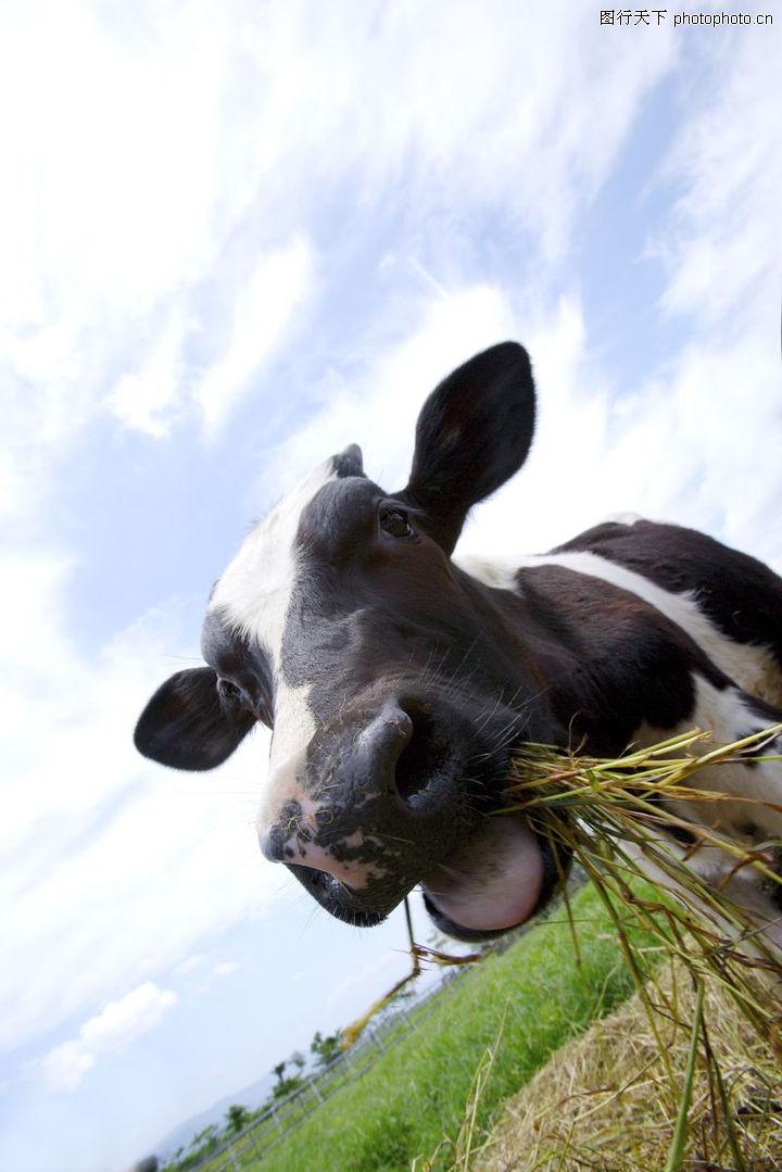 农场动物表情0017