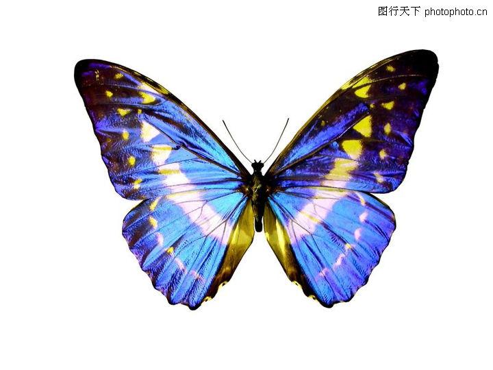 动物,蝴蝶标本
