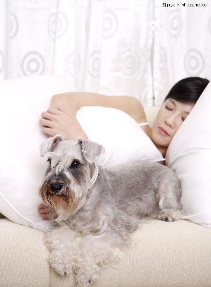 女性宠物,生活方式,睡觉 陪伴 主人,女性宠物0077