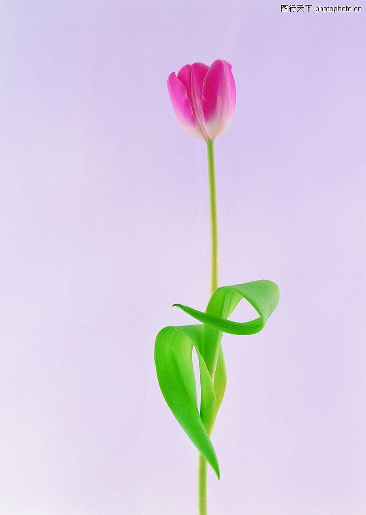 植物,一枝花