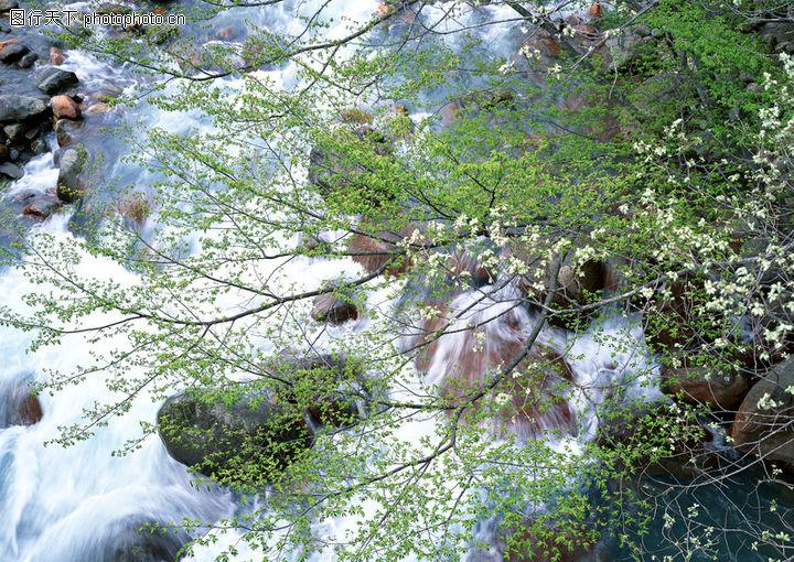 高山流水,自然风景,开花季节 水色 美景,高山流水0100