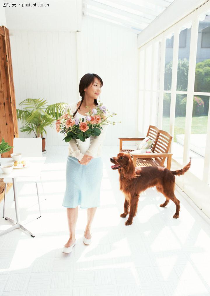 家有宠物,生活方式,阳光满屋 搬花盆 温顺狗狗,家有宠物0054