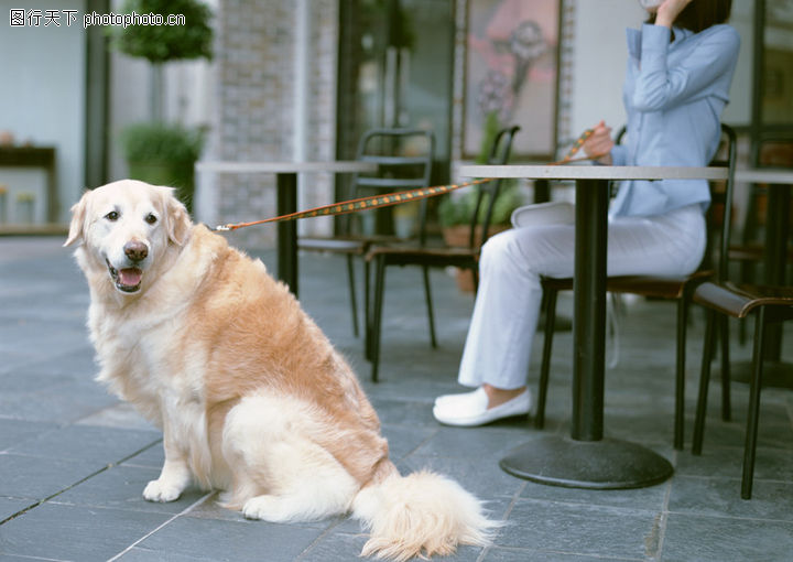家有宠物,生活方式,忠实宠物,家有宠物0157