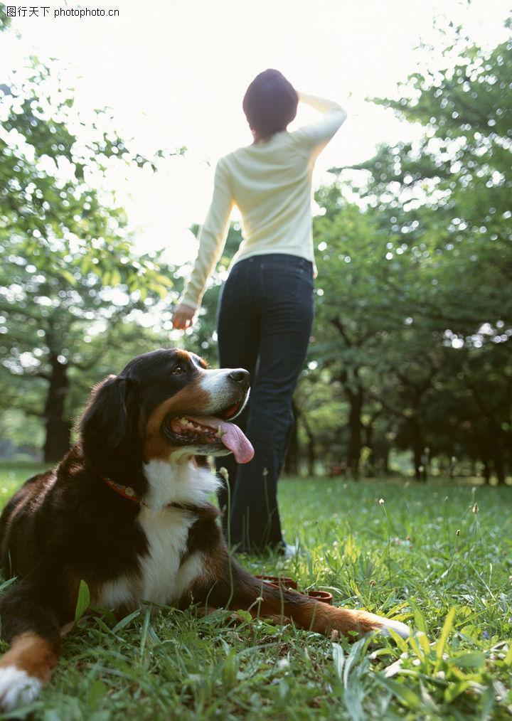 家有宠物,生活方式,踏春,家有宠物0184