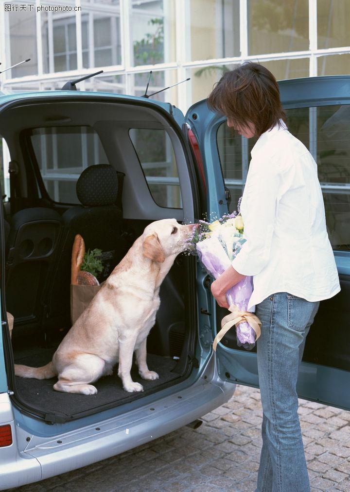 家有宠物,生活方式,车辆 花束,家有宠物0188