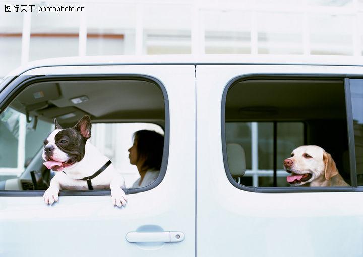 家有宠物,生活方式,家有宠物,家有宠物0194