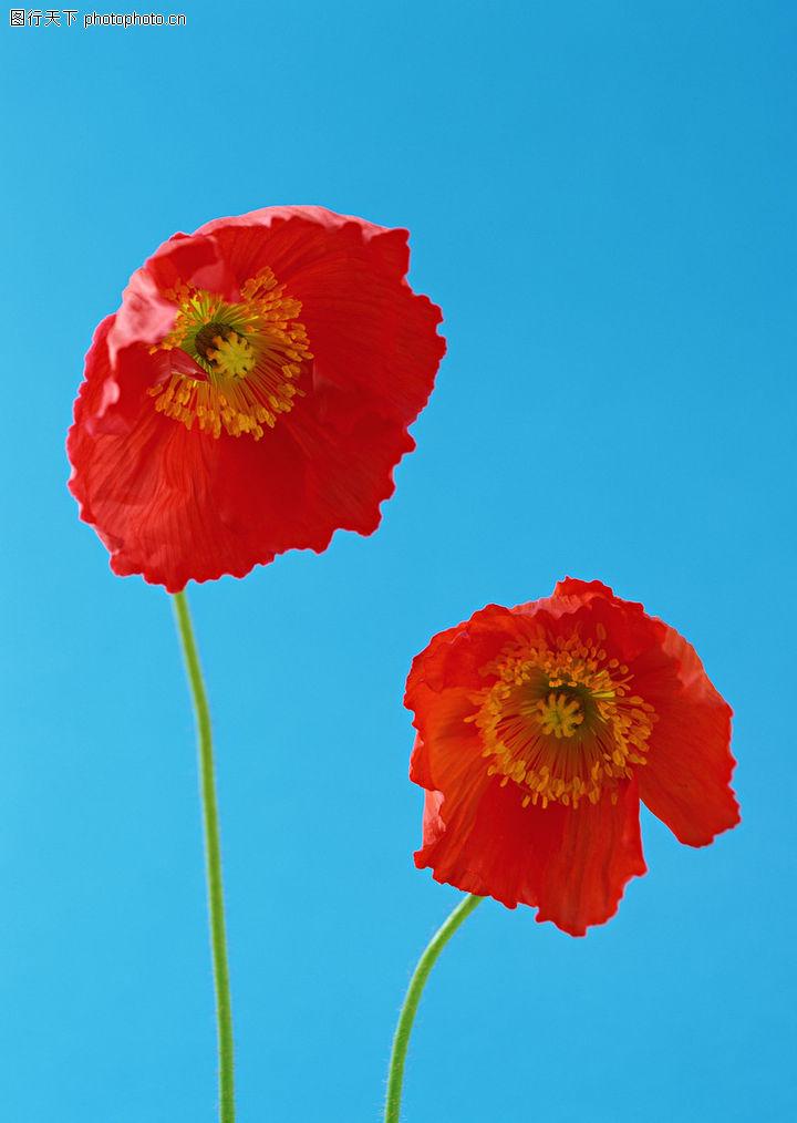 花的彩绘0106 花的彩绘图 植物图库