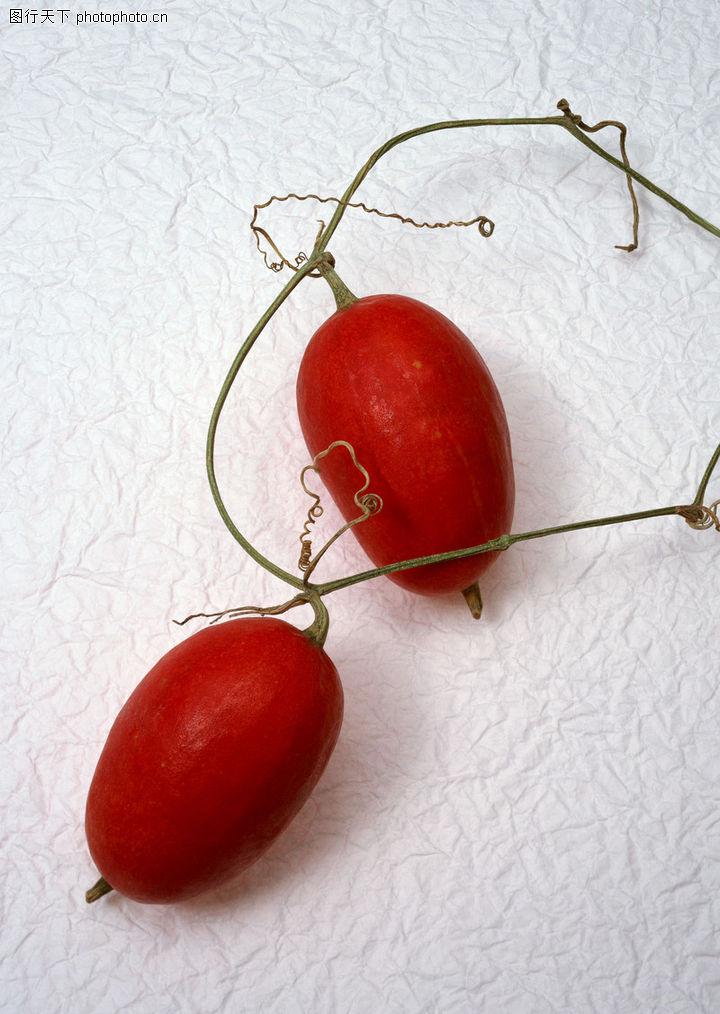 结红色果实的盆栽