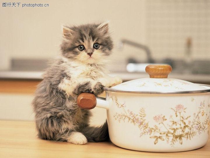 宠物猫咪,动物,容器 小动物