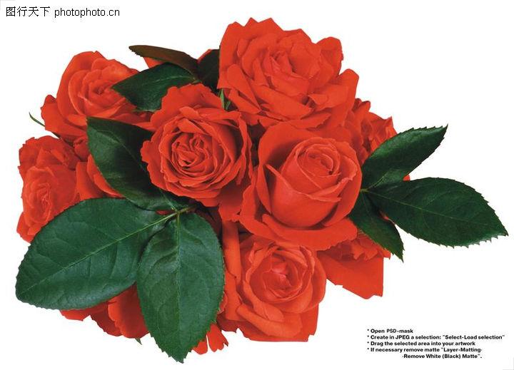 玫瑰花束 一束漂亮的红色玫瑰花