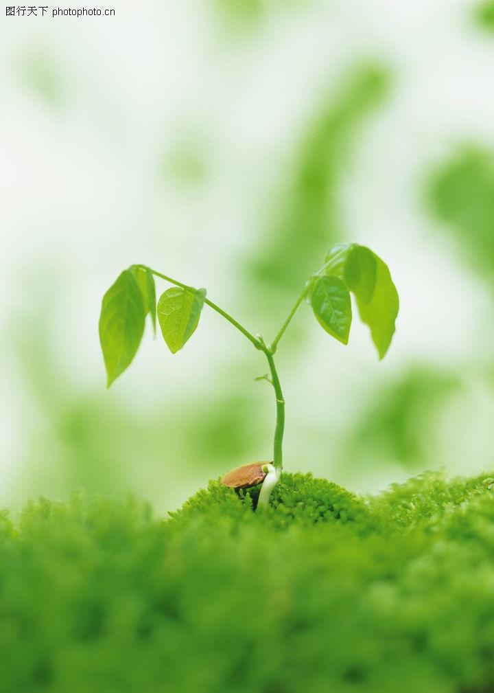 芽的初生结构简图