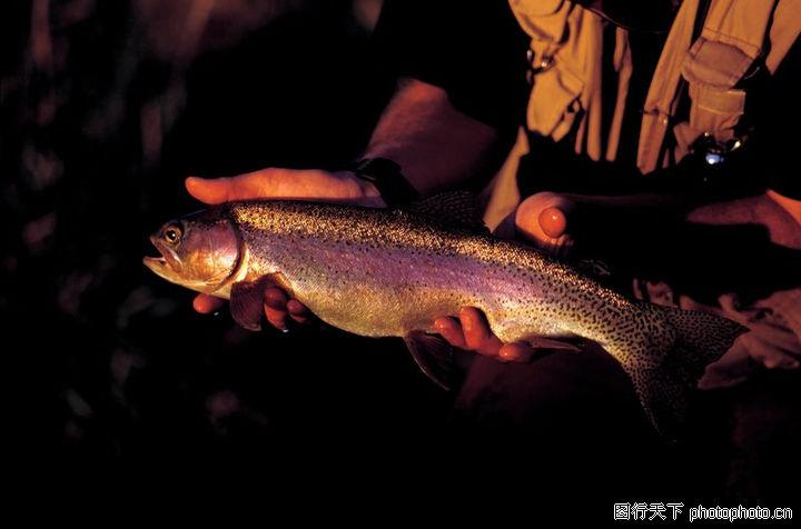 户外运动,运动,一条鱼,户外运动0045