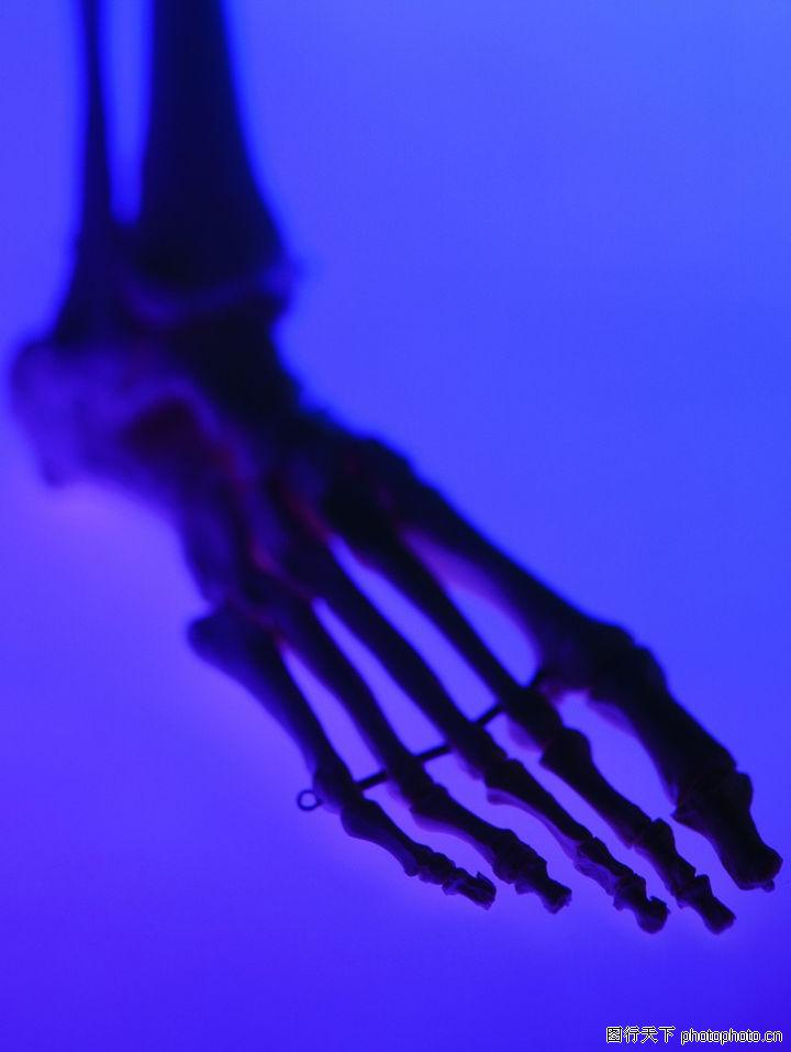 动物脚部骨骼图