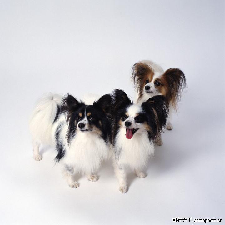 宠物精灵,动物,可爱的狗狗