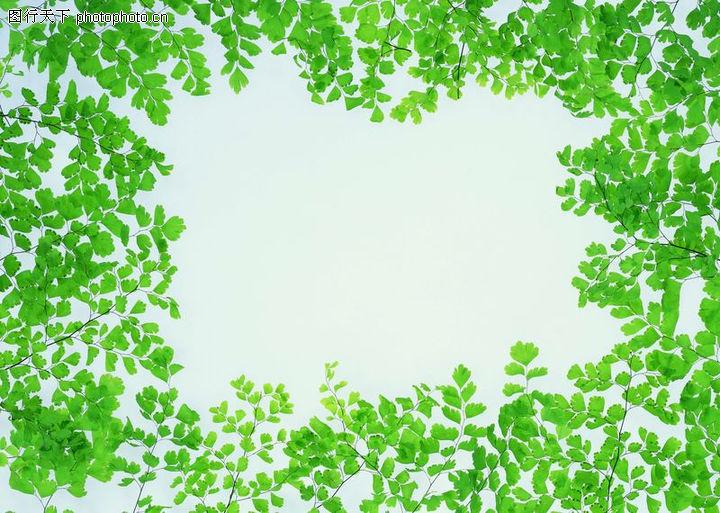 植物背景,自然风景,贴纸框