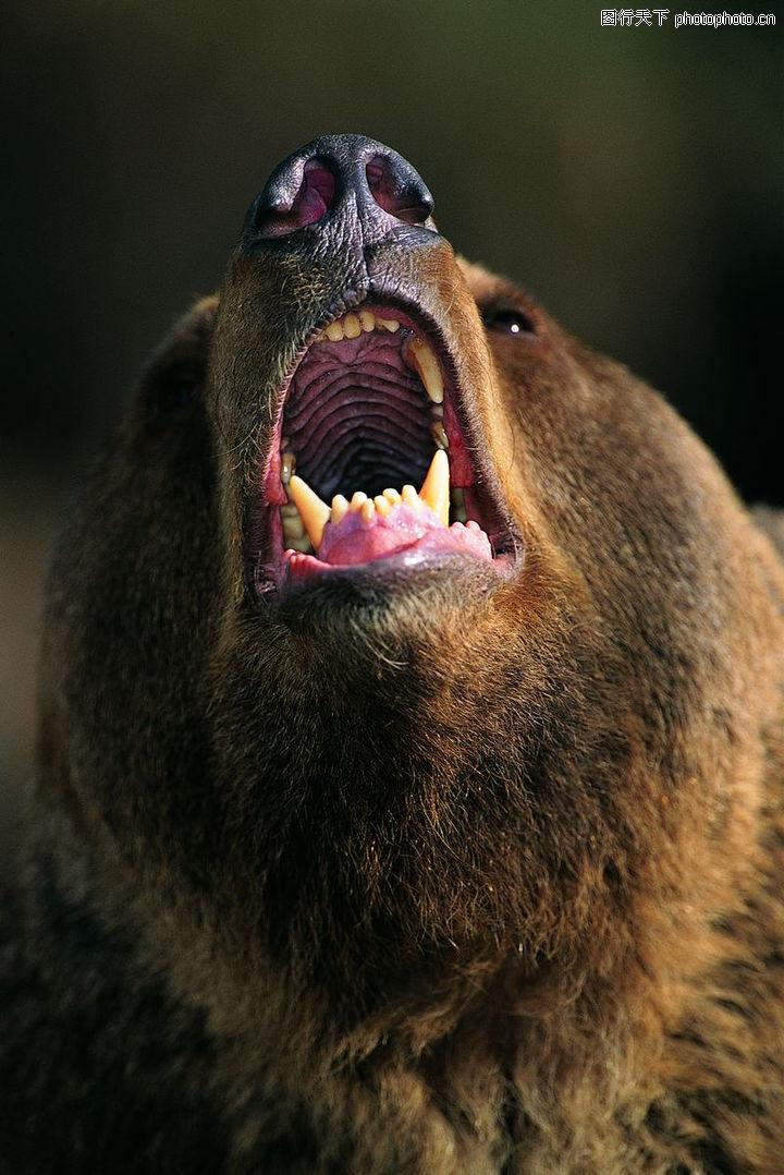 动物的脸,动物,尖牙,动物的脸0043