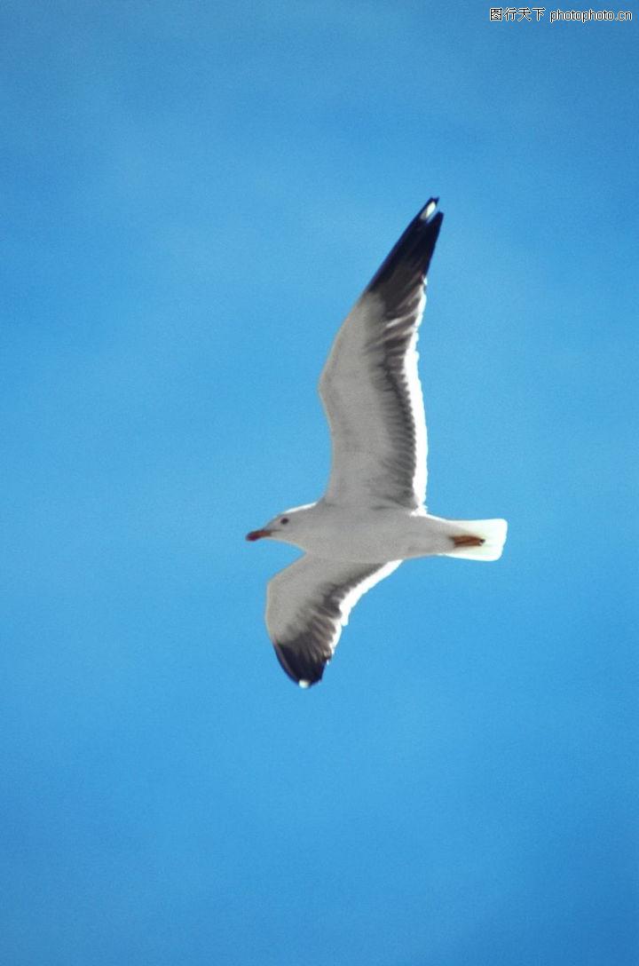 各类珍禽,动物,飞翔,各类珍禽0011