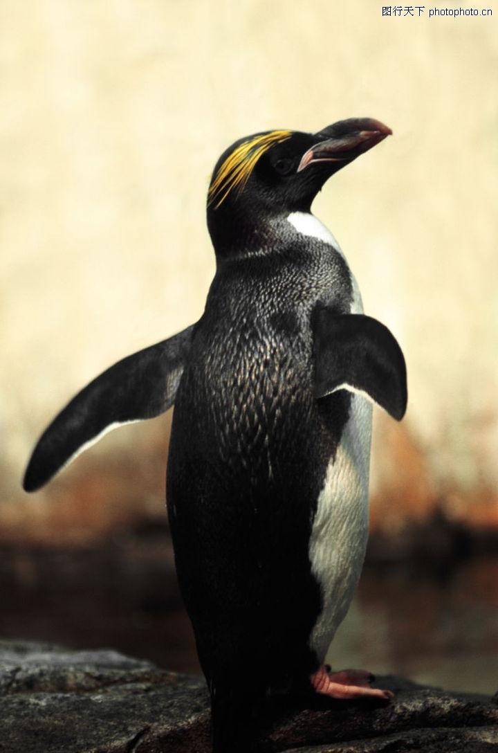 各类珍禽,动物,企鹅,各类珍禽0023