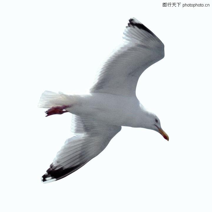 各类珍禽,动物,各类珍禽0067