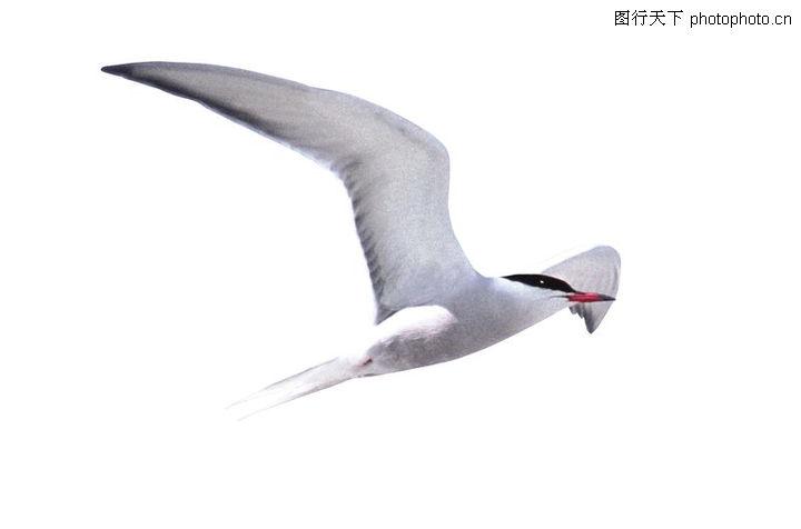 各类珍禽,动物,飞鸟,各类珍禽0085