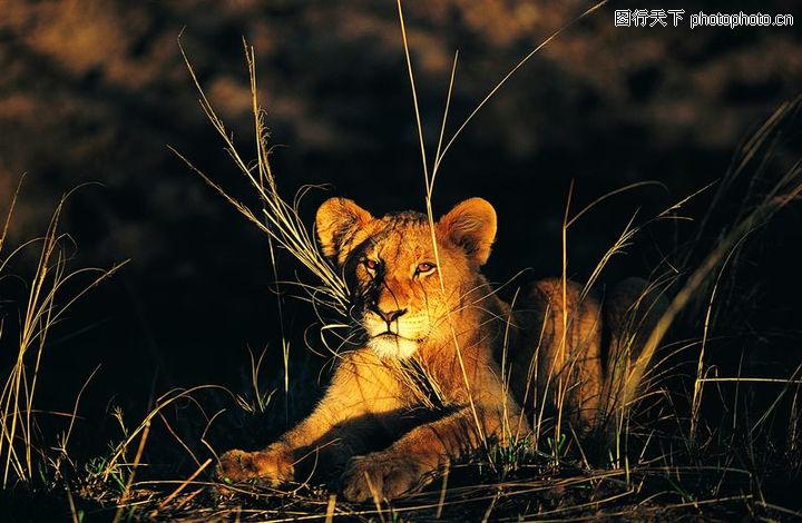 非洲动物0027