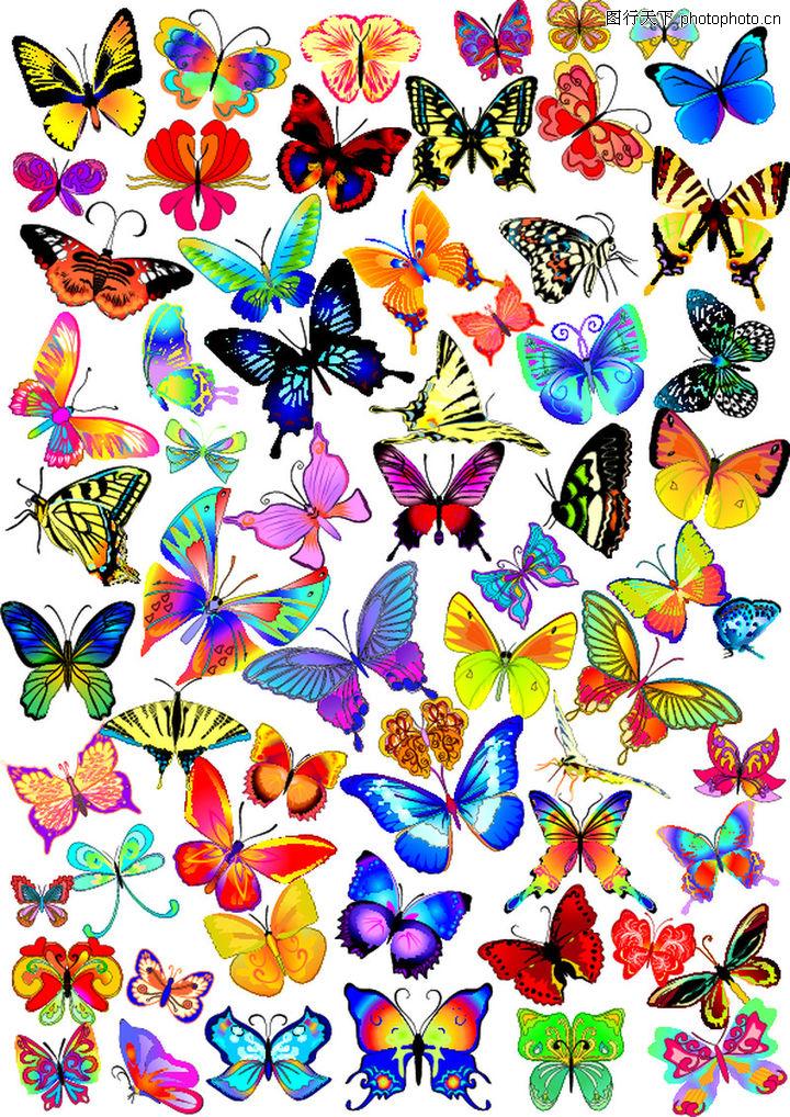 其他,欧美花纹元素,彩蝶 蝴蝶 昆虫,其他0005
