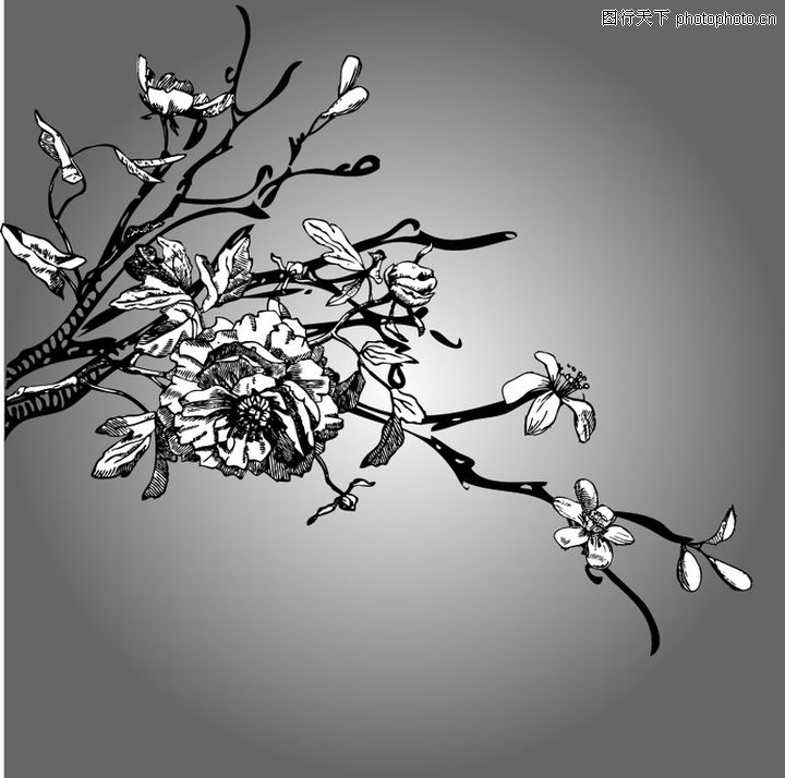 精品花纹图藤,花纹图案,花枝 亮部,精品花纹图藤0015