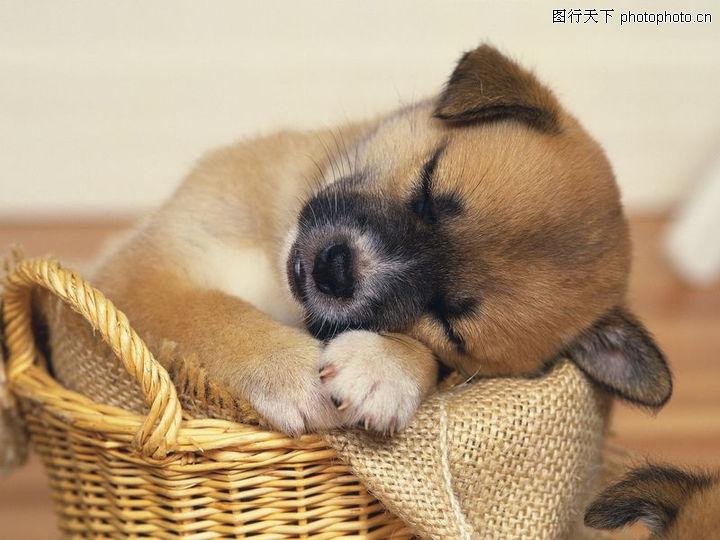 动物睡觉的样子