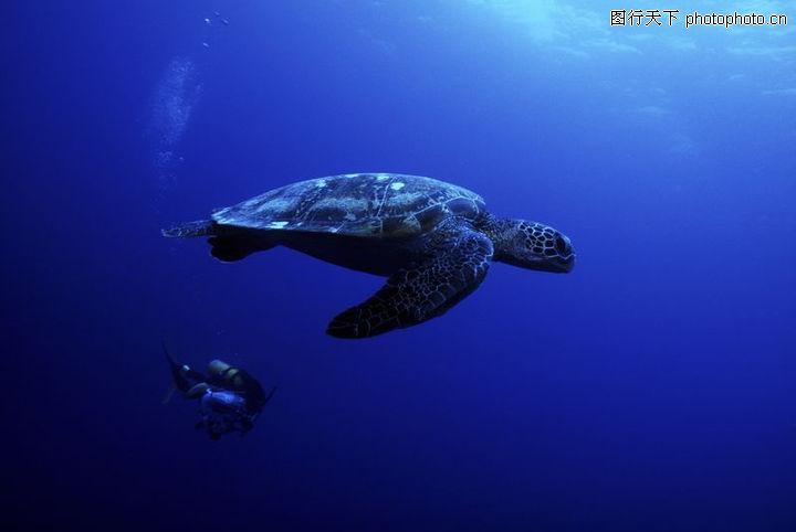 深海动物,动物,深海动物0038