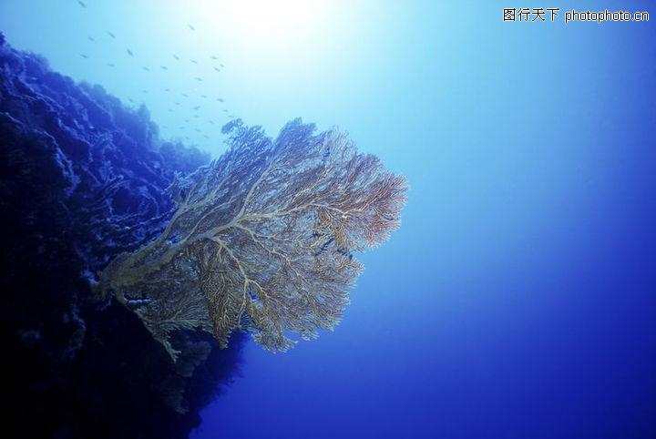 深海动物,动物,深海动物0056