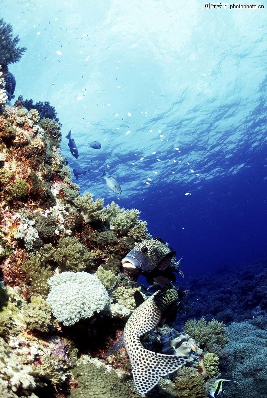 深海动物0115