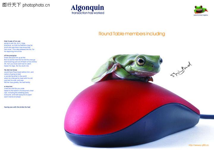 青蛙,创意设计,青蛙0003