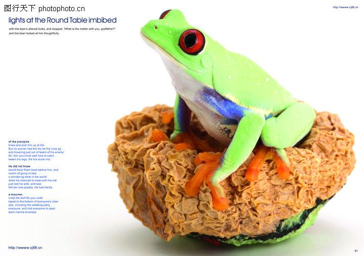 青蛙,创意设计,青蛙0006