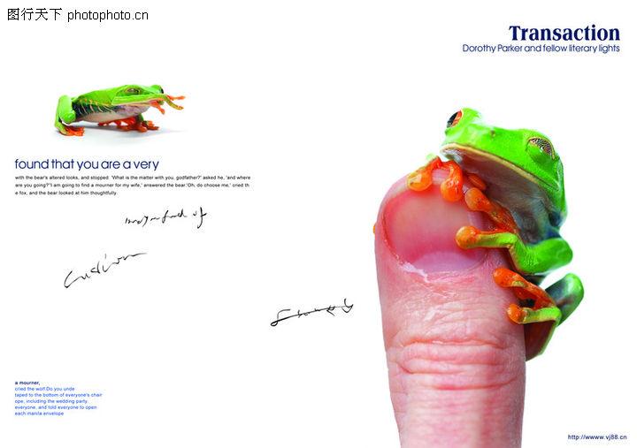 青蛙,创意设计,青蛙0007