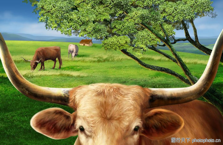 大自然景观,风景,大自然景观0066