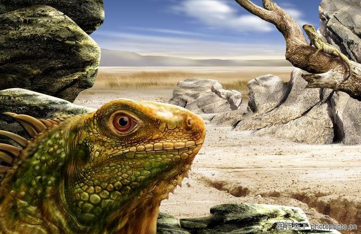 大自然景观,风景,变色龙 变色龙,大自然景观0075